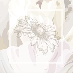 https://www.angowallpaper.com/collezioni/linea-natural/