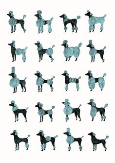 Dog Grooming Supplies & accessories (paid link) #DogCareGuide #DogGrooming Poodle Grooming, Dog Grooming Styles, Dog Grooming Salons, Pet Grooming, Corte Poodle, Poodle Cuts, Puppy Cut, Tea Cup Poodle, Dog Life