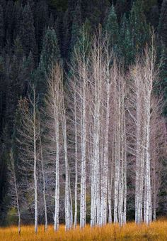 lonely forest
