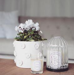 Quelques fleurs pour vous souhaitez une belle journée ☀️✨ Bienvenue à mes nouveaux abonnés et merci pour tous vos petits mots qui sont des petits bonheurs au quotidien  #athome#blog#deco#fleurs#bougies#diptyque#salon#marielapirate#blogdecoreims#blogreims