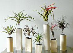Комнатные растения для дома в вазох разной формы