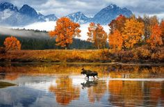 Moose walks the river...photo by Glen Hush - Pixdaus