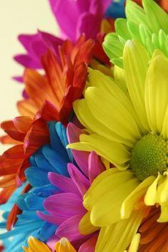 Rainbow flowers - moment, love