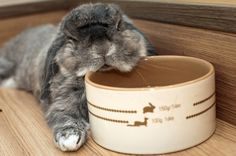 chin rest, AWEE .... I love bunnies specially big one just want to hold one !!! There sooo fluffy
