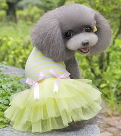 SMALLLEE_LUCKY_STORE Pet Chick TUTU Dresses * Find out more about the great product at the image link. (This is an affiliate link) #DogLovers