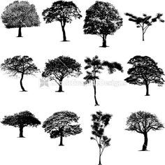 Tree Silhouette Clip Art | Nature Tree Silhouettes Clip Art Design | StockGraphicDesigns