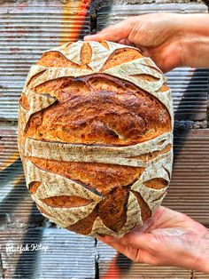 Sourdough traditional breed
