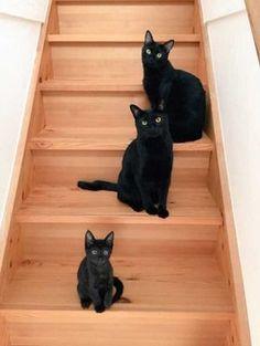 Trois petits chats noirs sur un escalier