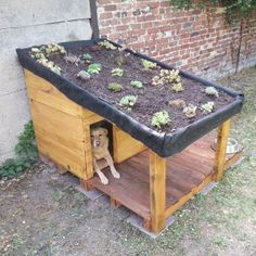 Doghouse With Green Roof / Niche Pour Chien Avec Toiture Végétalisée & Rangement