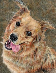 Happy Dog by Joanne Stevens - Happy Dog Drawing - Happy Dog Fine Art Prints and Posters for Sale