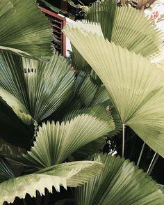 New Ideas Nature Plants Flowers Green Estilo Blogger, Amazing Greens, Plant Aesthetic, Nature Plants, Green Nature, Shooting Photo, Tropical Plants, Colorful Plants, Tropical Vibes