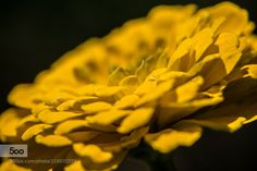 yellow! by albertle. Please Like http://fb.me/go4photos and Follow @go4fotos Thank You. :-)