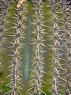 Cactus Needles (by ellene000)