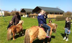 Hooi Hooi! Een ponyritje op FarmCamps Mariekerke Glamping, Tent, Cow, Animals, Kids, Young Children, Store, Animales, Boys