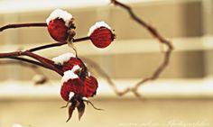 BİR VATAN BİN CAN Dandelion, Flowers, Plants, Dandelions, Plant, Taraxacum Officinale, Royal Icing Flowers, Flower, Florals