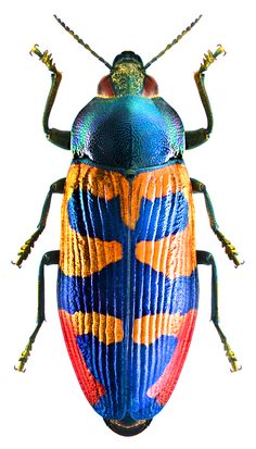 Beetle Insect, Insect Art, Especie Animal, Cool Bugs, Beautiful Bugs, Beautiful Pictures, A Bug's Life, Bugs And Insects, Amphibians
