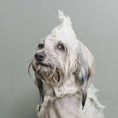 Cães Molhados