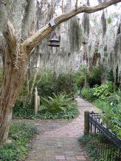Spanish Moss in Charleston, SC