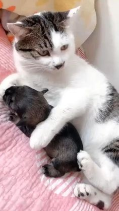 Cute Baby Cats, Cute Little Animals, Cute Cats And Kittens, Cute Funny Animals, Funny Cats, Baby Dogs, Funny Humor, Adorable Baby Animals, Cats Humor