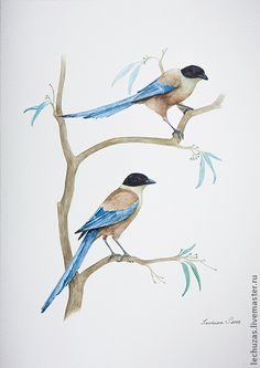 Azure-winged Magpie. Traditional art ( watercolor). Svetlana Markina (LechuzaS) . Size: 21cm*30cm