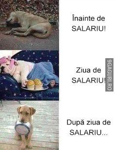 Așa stă treaba cu salariul!   Link Postare ➡ http://9gaguri.ro/media/asa-sta-treaba-cu-salariul