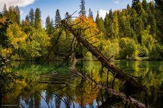 Wilde Natur am Crestasee Flims