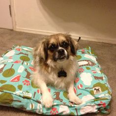 """@emmy985837's photo: """"Ranger on his new #mollymutt bed. #mutts"""""""