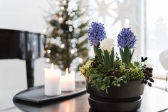 """Kaupallinen yhteistyö Asennemedian ja Kauniisti kotimaisen kanssa Onko teillä jotain sellaista, joka joulussanne on """"pakko"""" olla – sellaista jota ilman joulu ei tunnu saapuvan ollenkaan? Minulla ne taitavat olla hyasintit.Olivat ne sitten valkoisia, sinisiä tai punaisia, hyasintitovat mielestäni ylivoimaisesti kauneimpia joulukukkia. Tärkein on silti niiden tuoksu, yhtä aikaa raikas ja makea.Hassua sinänsä, että vaikka siinäei ole häivähdystäkään jouluisina pitämistämme aineksista kuten…"""