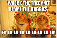 18 Christmas Memes To Make Your Holiday Funnier - World's largest collection of cat memes and other animals Funny Animal Memes, Funny Animal Pictures, Funny Cats, Funny Animals, Funny Jokes, Cute Animals, Hilarious, Funniest Animals, Quote Pictures