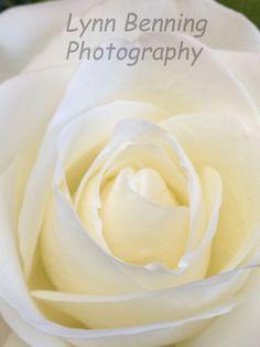 WHITE ROSE by LBENNINGPHOTO on Etsy, $25.00