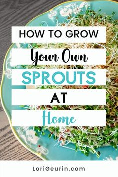 Learn how to grow sprouts from home in this quick and easy tutorial and video. Sprouts are fun and easy to grow and so nutritious to eat. You can grow broccoli, mung bean, alfalfa, and other types of sprouts using trays or Mason jars.    #howtogrowsprouts #sprouts #broccolisprouts #growsproutsindoors #growsproutsinatray #microgreens Broccoli Sprouts, Hobbies To Try, Hobbies That Make Money, Stress Management Course, Diy Crafts And Hobbies, Growing Sprouts, Good Sources Of Calcium, Alfalfa Sprouts