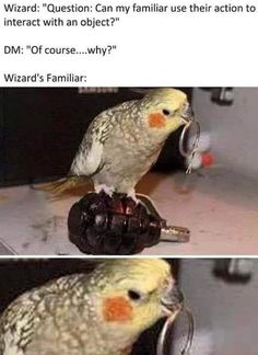 Dnd Funny, Stupid Funny Memes, Haha Funny, Funny Cute, Funny Stuff, Humor Mexicano, Dnd Stories, Dungeons And Dragons Memes, Dnd Dragons