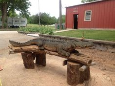 Crocodile wooden sculpture