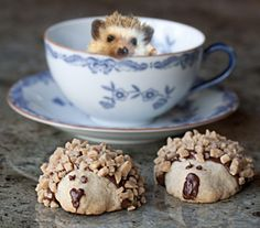 These cute Baby Hedgehog Cookies will be the hit of your next party or cookie exchange. Shortbread Biscuits, Shortbread Recipes, Sweet Recipes, Dog Food Recipes, Hedgehog Cookies, British Cake, Baby Hedgehog, Heath Bars, Pudding Desserts