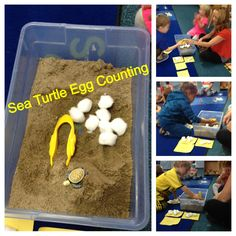"""Preschool Ocean Theme Math: Sea Turtle Egg Counting Activity. Tub filled with sand, cotton ball """"eggs"""", tongs/tweezers, sea turtle hatchling, numbered cards 1-10 with dots on back for kids to count if not ready to identify numbers by sight yet."""