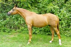 What an amazingly beautiful horse!