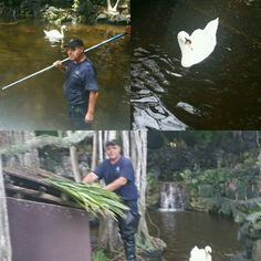 Steve and his companion #swan #BonaventureFL