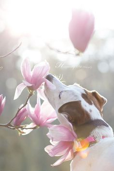 The smell of spring! by Heavenly Pet Photography