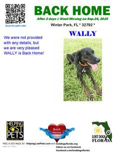 Helping Lost Pets   Dog - Plott Hound - Back Home