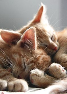 ".Don't really like ""orange"" kitties . . . but how sweet is this?"