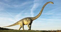 Dinosaurs | Earth Blog