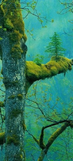 I'm nearly positive this is somewhere in Oregon. Some may wonder at a tree growing on the branch of another. Oregonians wonder at trees simply growing.