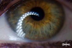 Green Eye,  #green eye, #Heterochromia