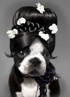 Dog portraits by Sylvain Brejon
