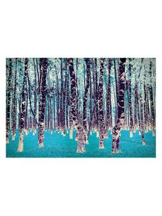 Lucid Birch (Canvas) by SALTY AND SWEET at Gilt