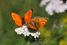 8 anvendelsesmuligheder, som du ikke vidste en banan havde Flying Flowers, Moth Caterpillar, Butterfly Photos, Praying Mantis, Beautiful Butterflies, My Flower, Besties, Wings, Bloom