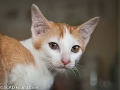 As she is very young, Blink's full personality has yet to develop, though she has a friendly nature and also gets on well with other cats. We will update more when her character really starts to shine through!