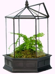 Want ***THE BEST** Six Sided Terrarium For Your Garden Display? SHOP With H Potter! ***AFFORDABLE PRICES & FAST SHIPPING!***