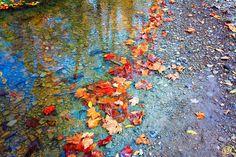 https://flic.kr/p/MxDa69 | Autumn Creek at Hinckley Lake