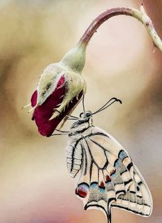 Butterfly posing for the photo. - City of animals Butterfly Pose, Butterfly Pictures, Butterfly Flowers, Butterfly Wings, Beautiful Bugs, Beautiful Butterflies, Beautiful Flowers, Beautiful Creatures, Animals Beautiful